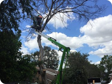 Emergency Tree Service