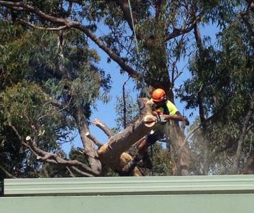 Tree Cutting Sydney