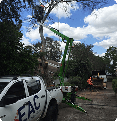 Affordable Tree Removal Service Mulgoa Elevated Arbor Care