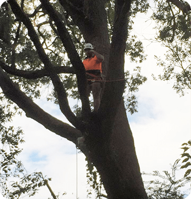 Tree Removal Hawkesbury
