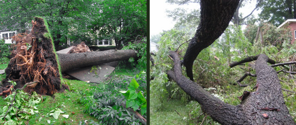 Storm Damage Cleanup Services
