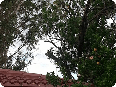 Tree Services penrith