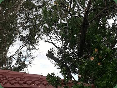 Tree Services penrith