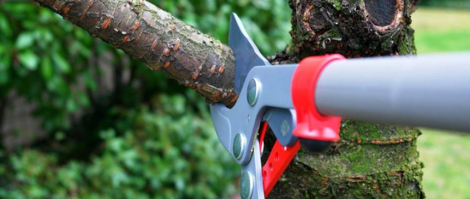Tree Trimming & Pruning