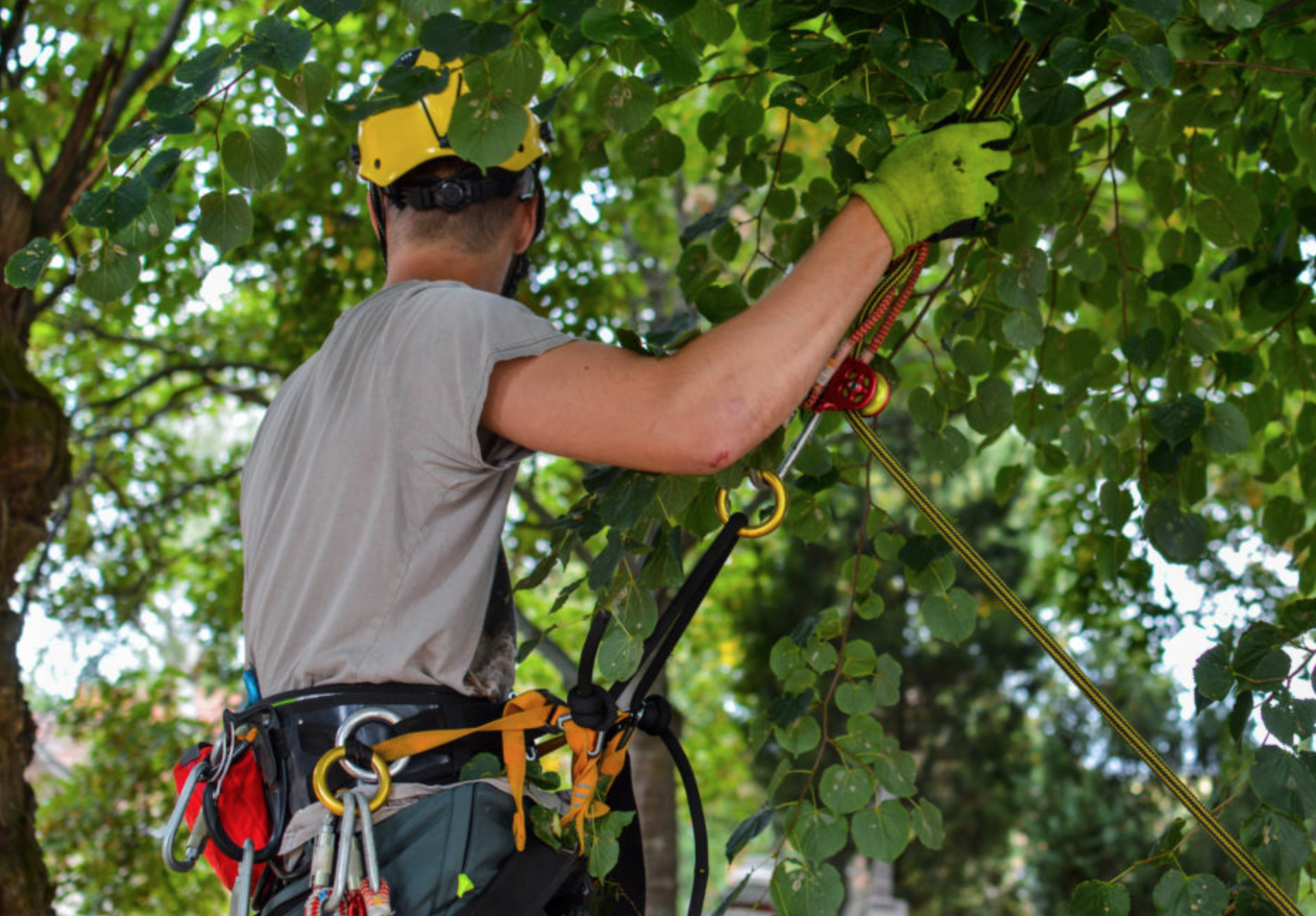tree removal nowra